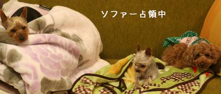 IMG_2008032910.jpg