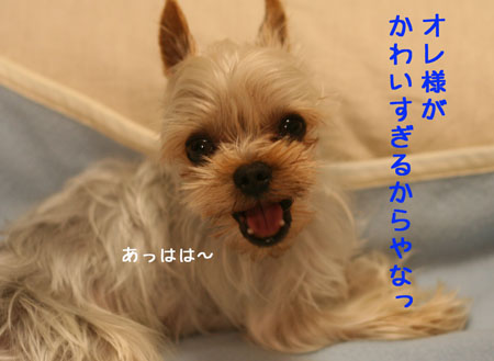 IMG_2008040104.jpg