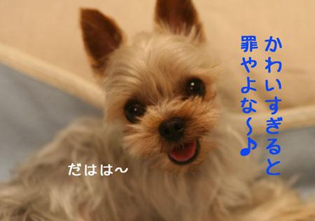 IMG_2008040105.jpg