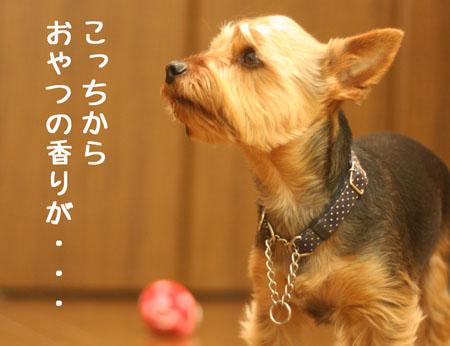 IMG_2008040803.jpg