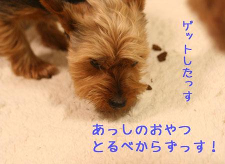 IMG_2008040805.jpg