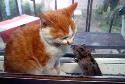 動物 おもしろ ムービー