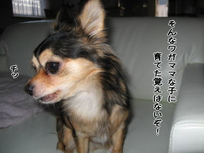 wan11094.jpg