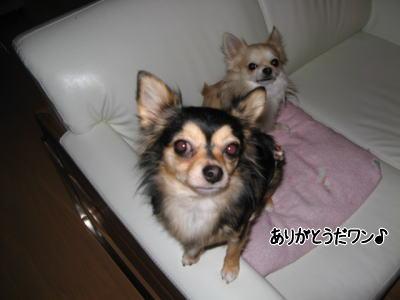 wan11243.jpg