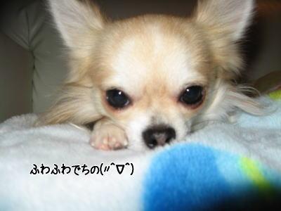 wan11281.jpg