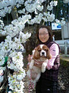 お花見(駿河平自然公園)1