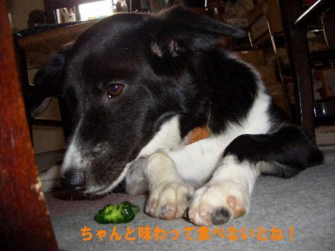 sonikatokyuuri4.jpg