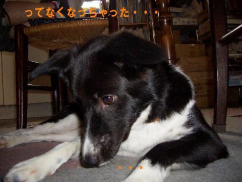 sonikatokyuuri5.jpg