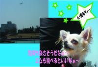 03_20080410234621.jpg
