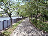 家の近く、毛馬桜ノ宮公園