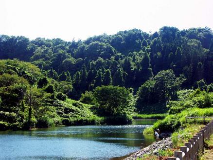 滝の頭-夏