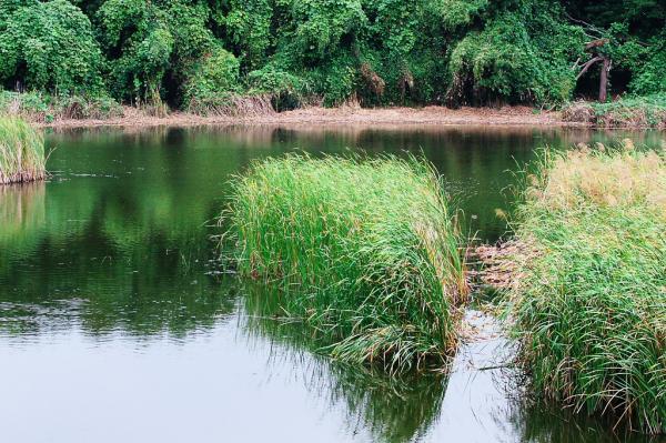 都内の秋の野池では。。。