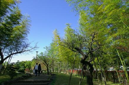 あけぼの山の竹林