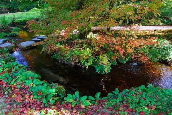 紅葉の池には