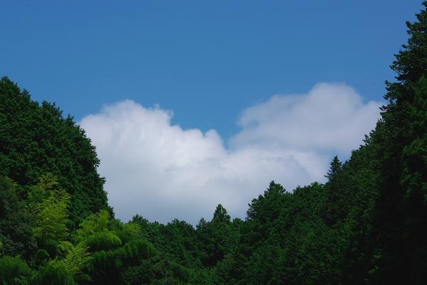 茶畑の上にあった森の空