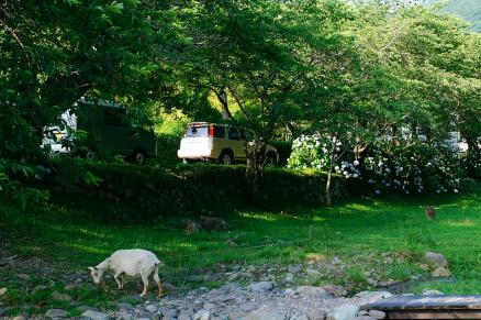 CR-Vと山羊