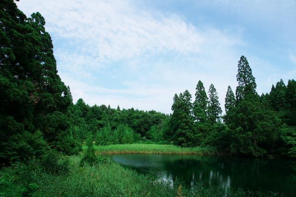 滝の頭湧水池