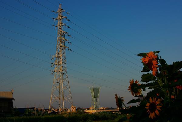 鉄塔と向日葵の夕景