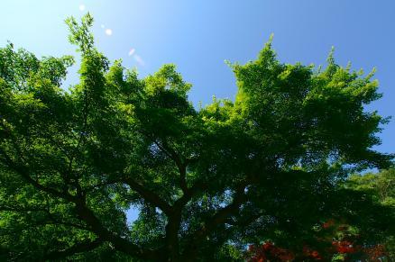 光と木々と