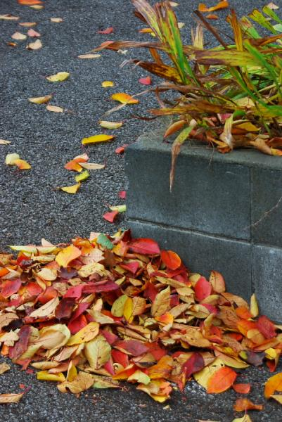 駐車場の秋