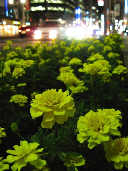 夜の神田のお花畑