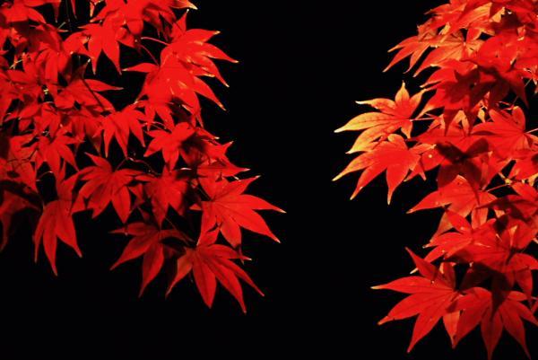 紅葉もいいなぁ。。。