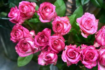 とある写真家の花物語 039s