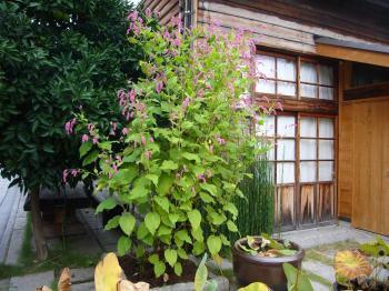 2008京都プチ同窓会 068s