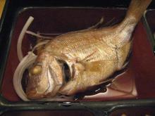 幸菜 本日のお魚