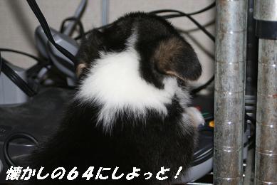 G_0663.jpg
