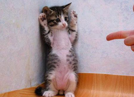 手を上げろ!
