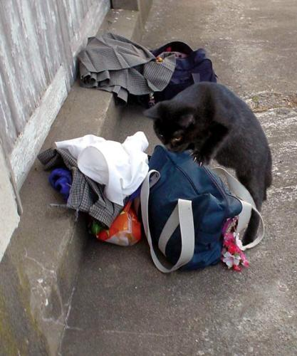 下着泥棒ネコ