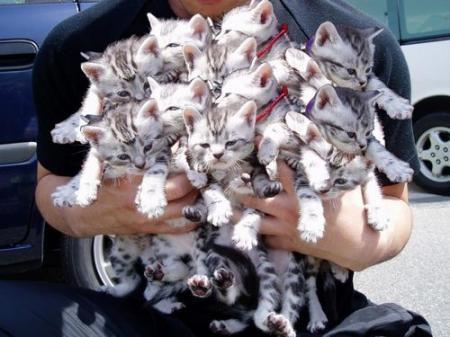 コネコたくさん