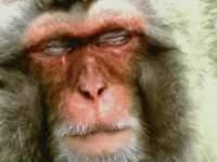 放送禁止CM 猿 がオバマ氏連想する為イーモバイルCM放送中止