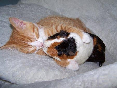 ネコとハムスター