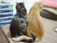 ネコのおもしろ画像集