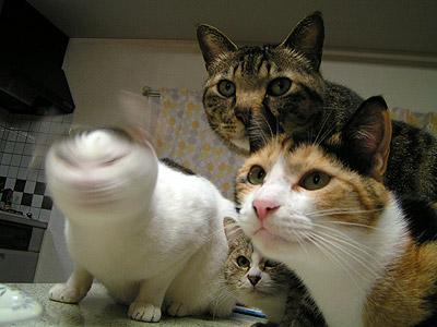 猫の顔が・・・w