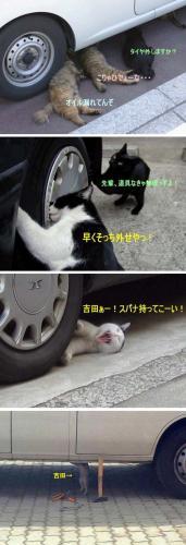 車修理するネコ