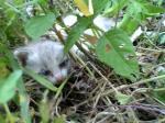 茂みの中の子猫
