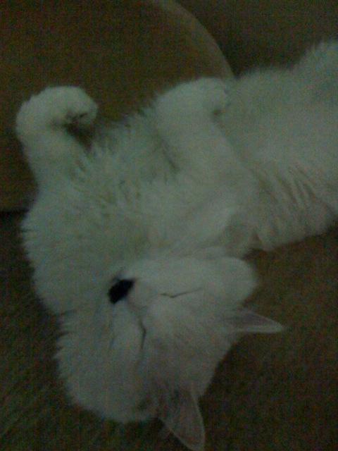 王子寝姿01