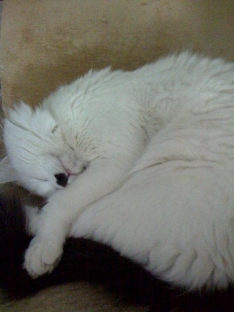 王子寝姿04