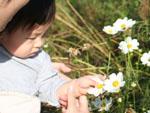 花びらグシャリ