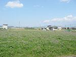 広がるレンゲ畑