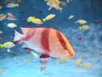 水槽内の魚たち