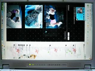 20070320-1.jpg