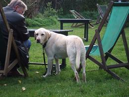 dog22102005.jpg