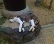 鳥居の足下で寝る猫