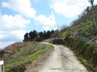 2007-03-04-010.jpg