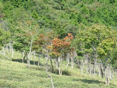 2007-09-08-145.jpg