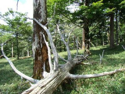2007-09-08-162.jpg